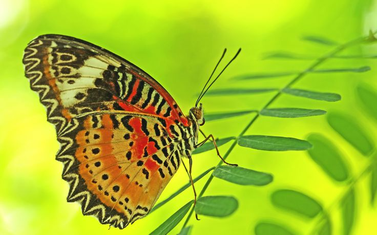 Free Wallpaper Background with Butterfly Macro Photo