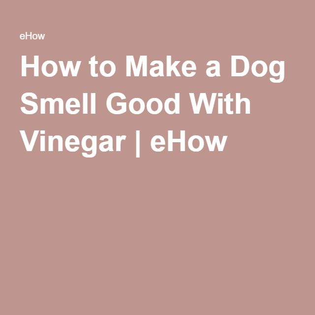 How to Make a Dog Smell Good With Vinegar | eHow