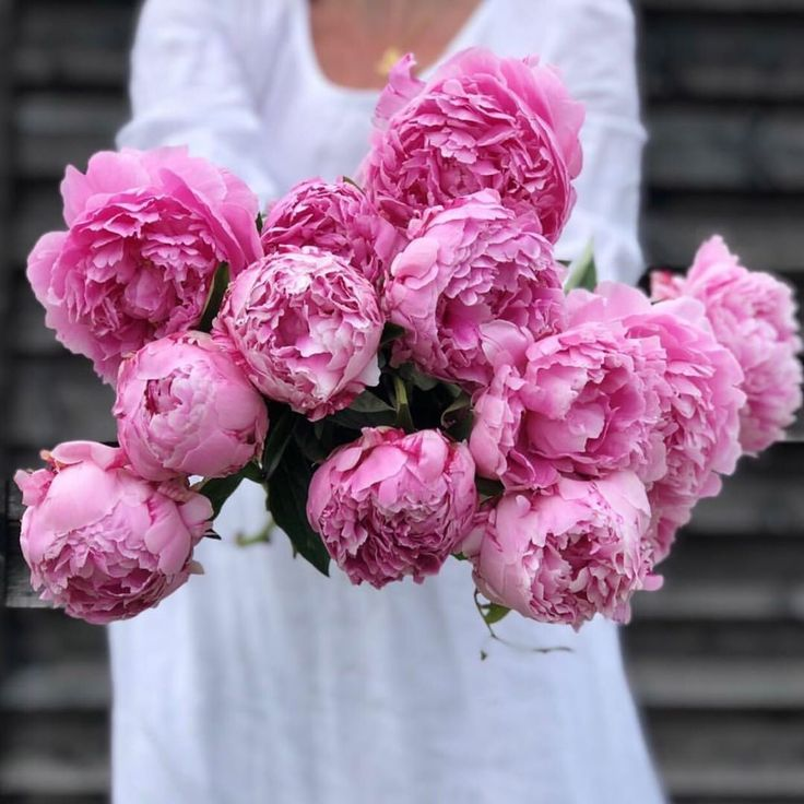 Peony name meaning Peony flower meaning, Flower meanings