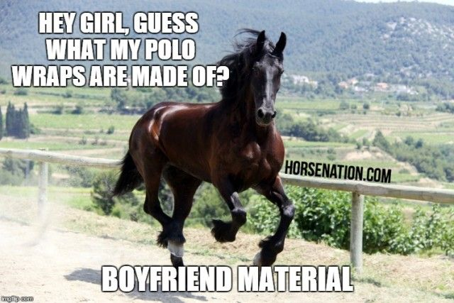 Pin On Ha The Epicenter Of Horse Humor