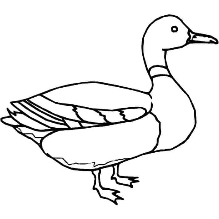 Mallard Duck Coloring Pages Animal Coloring Pages Dinosaur Coloring Pages Coloring Pages