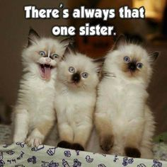 Funny Sister Cat Time Refrigerator / Locker Magnet
