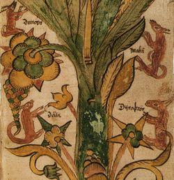 Yggdrasils fire hjorte. Fra et islandsk manuskript fra det 17. århundrede.  I den nordiske mytologi lever fire hanhjorte i verdenstræet Yggdrasils top; Dain, Dvalin, Dunør, Duratro. De græsser i træet og morgenduggen samles i deres gevirer og former verdens floder.  Tidlige forslåede fortolkninger af hanhjortene har omfattet de fire elementer, de fire årstider – eller månefaserne. I Finnur Magnússon indflydelsesrige værk fra 1824, forslås det at hanhjortene repræsenterer vinde. Baseret på en…
