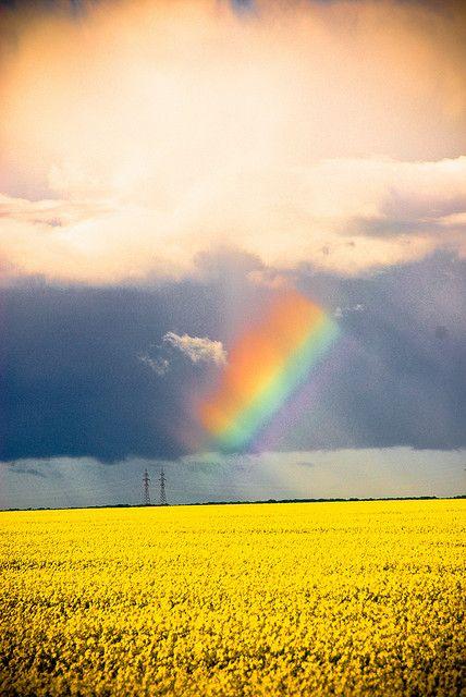 Rainbow over canola | #exploremb