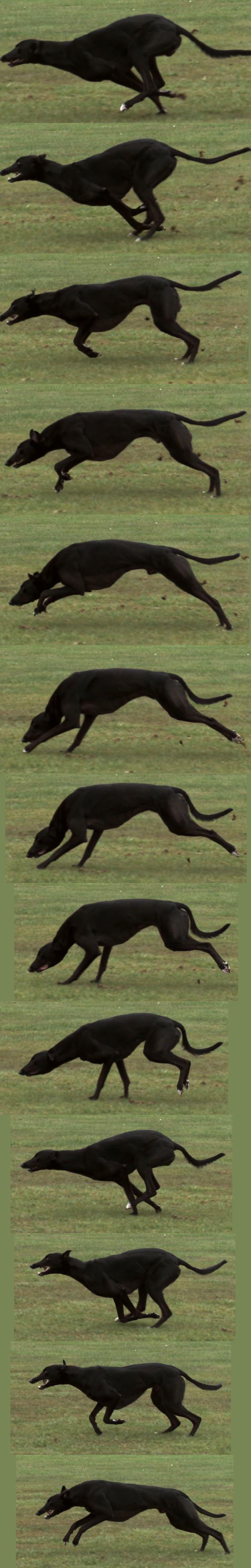 109 besten Animal Anatomy Bilder auf Pinterest   Tieranatomie, Tiere ...