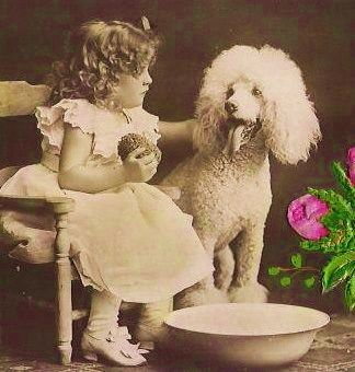 Vintage photo of little girl with her white standard poodle