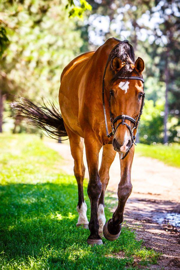 barbaraobrienphoto2014day:  July 9, 2014 - Bay Horse Walking 2014©Barbara O'Brien Photography