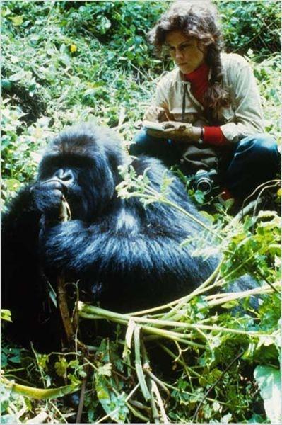 GORILLES DANS LA BRUME. APTED. 1988.L'histoire vraie de Dian FOSSEY, ethnologue, qui a voué sa vie à la sauvegarde des gorilles des montagnes jusqu'à y perdre son existence.