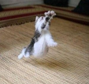 Comment gérer un chat agressif avec un chien sur LaVieDesChats.com