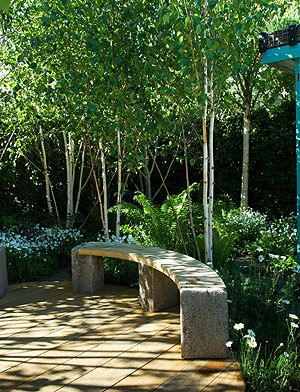 A group of silver birches turn a corner of the garden into a leafy retreat