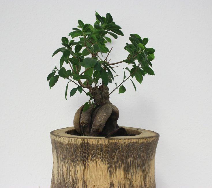 Plante Árvore: projeto doa mudas nativas para reflorestamento