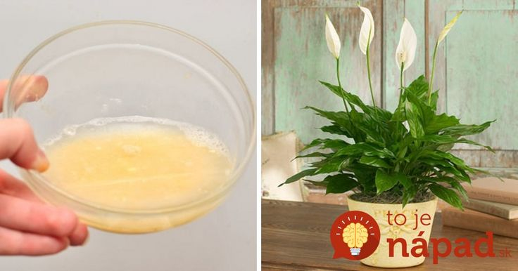 krásne rastliny plné života. Chcete ich mať tiež? Vyskúšajte jednoduchý domáci recept.