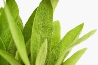 How to Dry Sage Leaves Yourself
