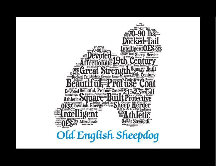 Traits of the Old English Sheepdog The Old English Sheepdog was the answer to the need for a strong dog capable of defending the flocks and herds from the wolves that existed at one time in England. By