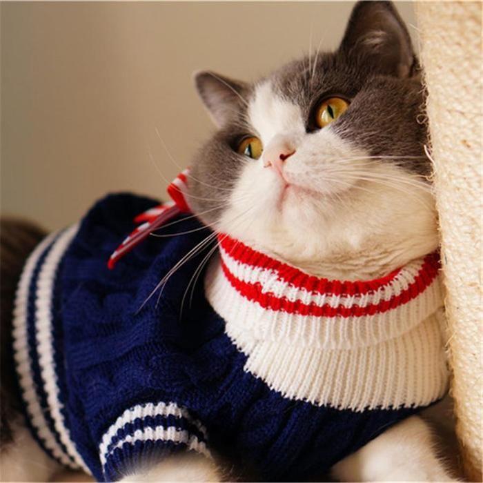 Коты в кофтах на аву