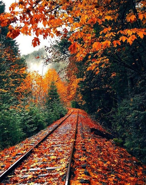 Epingle Par Cinda Shaffer Sur Autumn Hues Paysage Paysage Automnal Photographie De L Automne
