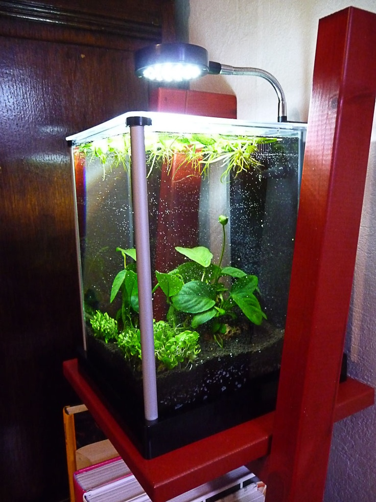 les 25 meilleures id es de la cat gorie aquarium fluval sur pinterest planted aquarium. Black Bedroom Furniture Sets. Home Design Ideas