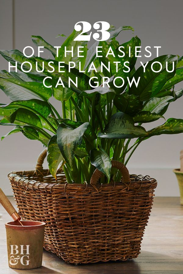 23 Of The Easiest Houseplants You Can Grow In 2020 Easy Care Indoor Plants Low Light House Plants Indoor Shade Plants