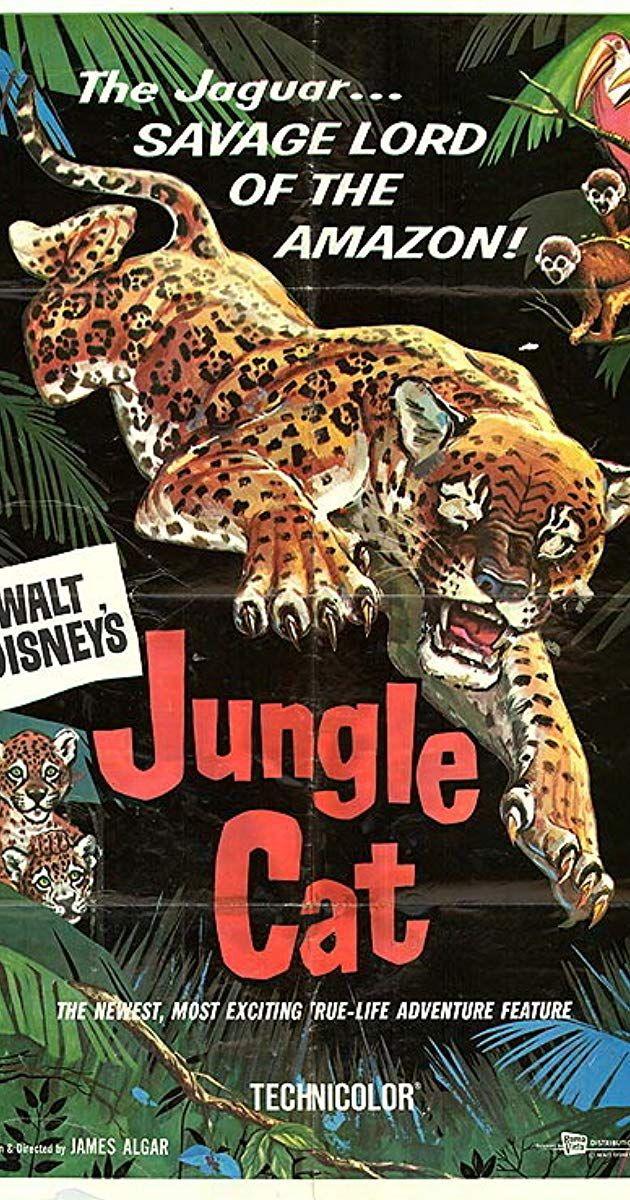 Jungle Cat (1960) IMDb (With images) Cat movie, Jungle
