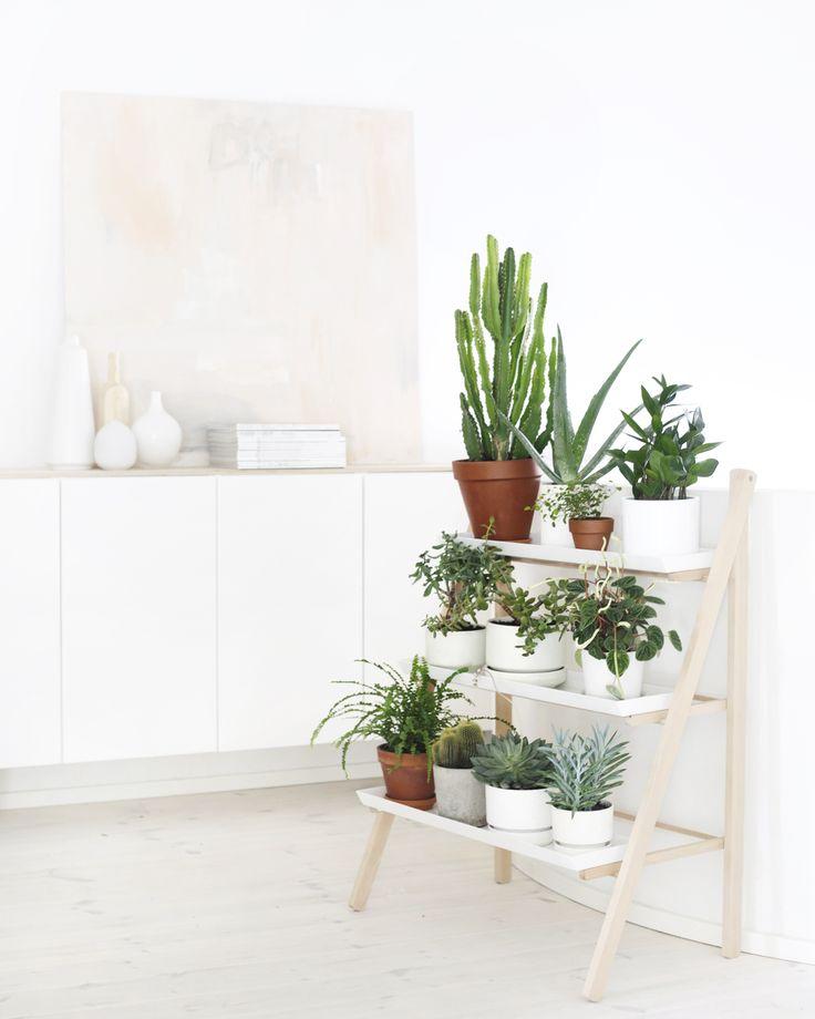 potted plants on a ladder shelf