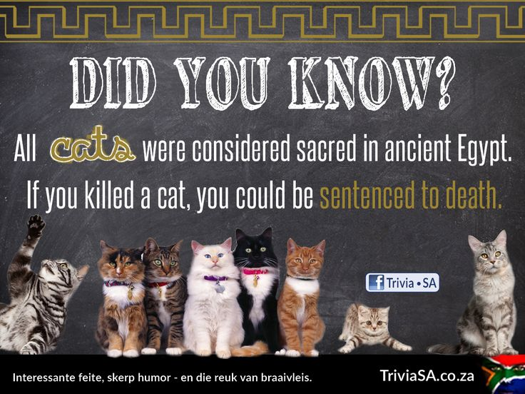 """All cats were considered sacred in ancient Egypt. If you killed a cat, you could be sentenced to death. (This """"did you know"""" card was designed by AdSpark: http://adspark.co.za)"""