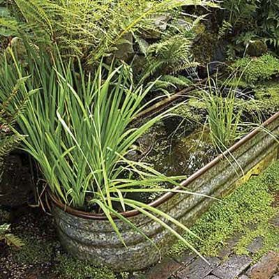 17 Best images about lawn care on Pinterest   Lawn care schedule ...