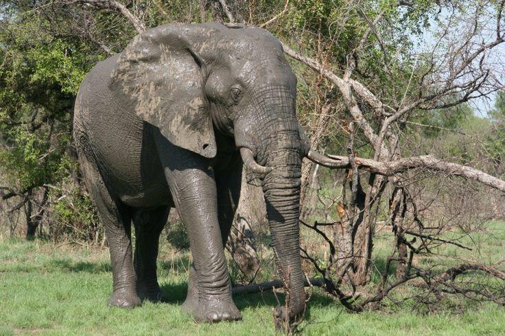 elephants (120)