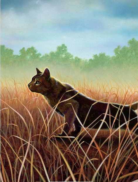 823 Best Warrior Cats Images On Pinterest Warrior Cats