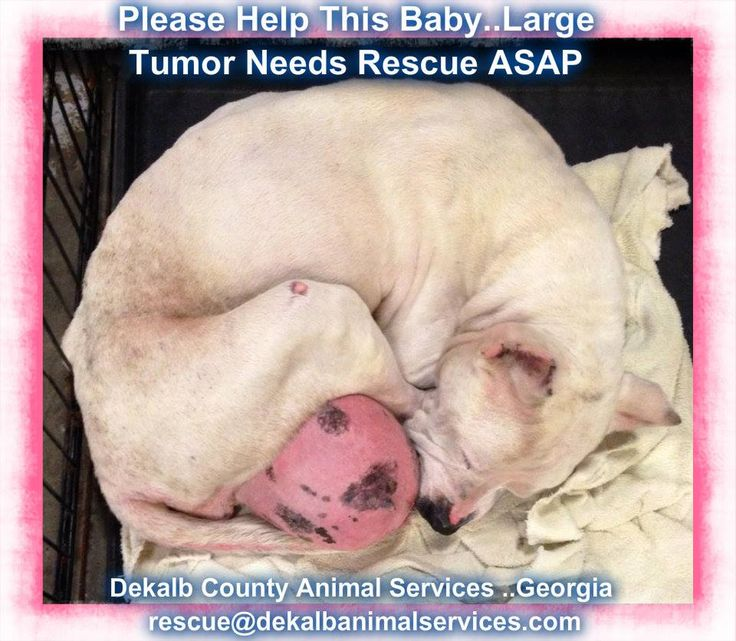 Dekalb County Animal Services..Decatur , GA .. RESCUE NEEDED IMMEDIATELY..  Via Dekalb Rescue  This sweet girl came in overnight. She has a huge tumor, super long nails, a goopy eye and is underweight. Despite the obvious neglect she has suffered, she is very sweet. She needs rescue ASAP. Her ID number is 21052345. If your rescue group can help, please email rescue@dekalbanimalservices.com