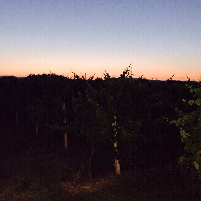 #19dibabo #forpartylovers #wine #prosecco #proseccobrut #sparkling #vineyard #sunset  Www.19dibabo.com