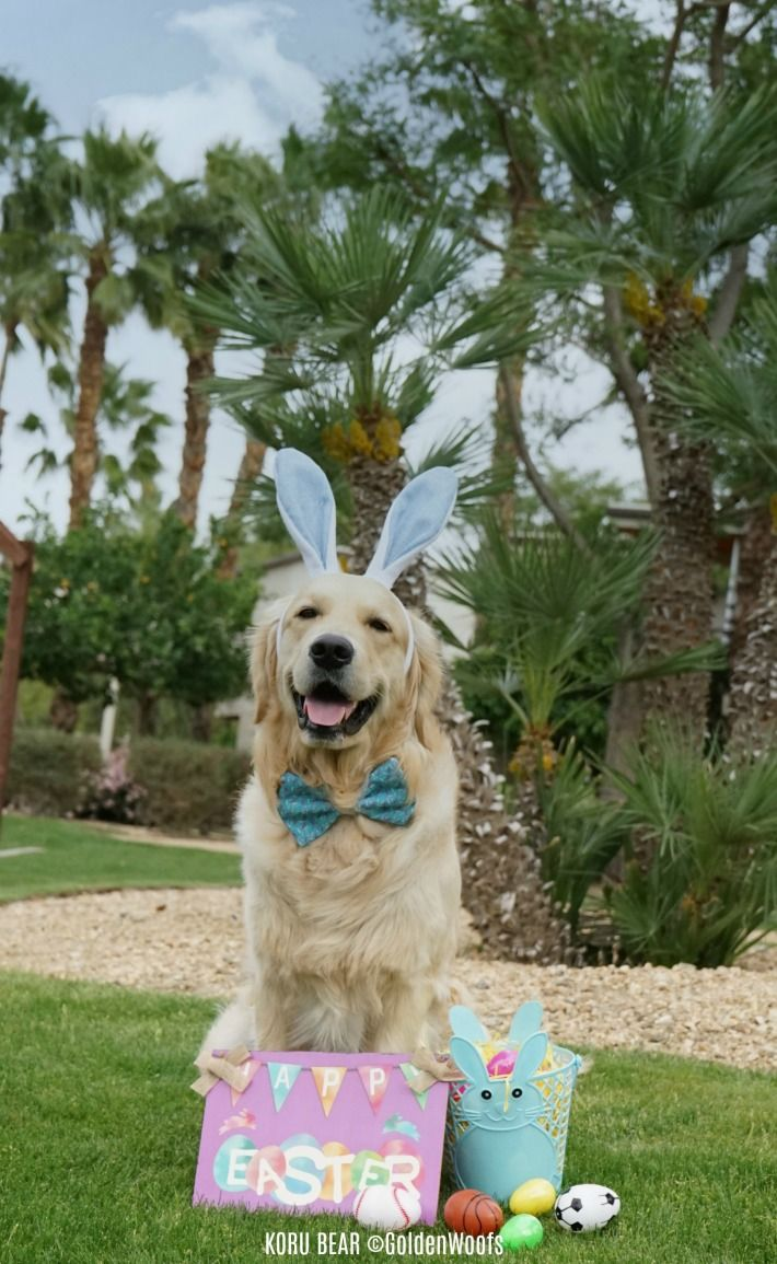 Eggciting First Easter With Images Easter Dog Easter Dog Photos Golden Retriever Easter