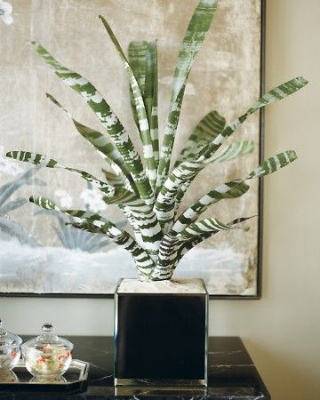 39 best images about bromeliad on pinterest | hanging baskets