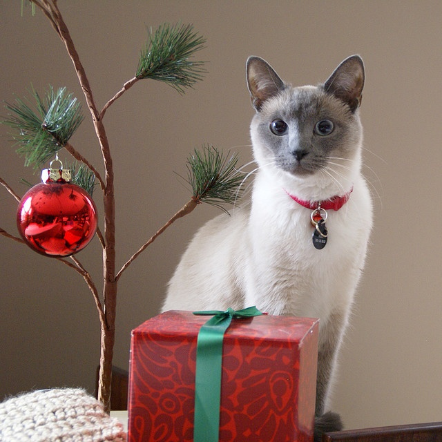 316 best Christmas Cats images on Pinterest | Christmas animals ...