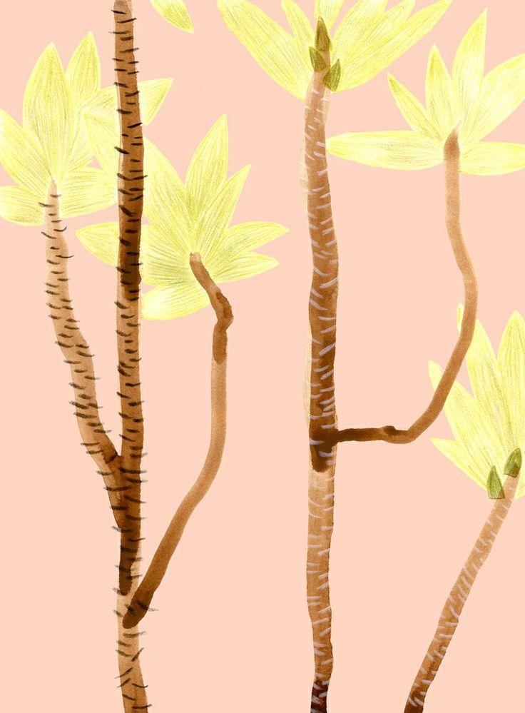 palm leaves / satsuki shibuya