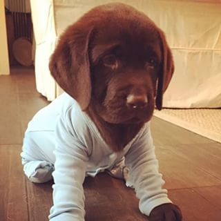 12 Puppies In Pajamas That Will Brighten Your Day