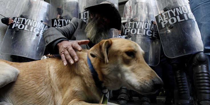 The Most Famous Animal In All Of Greece — Loukanikos The 'Riot Dog' — Has Died