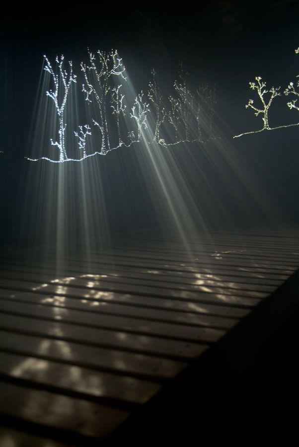 "Installation: boardwalk with ""optic tree lights"""