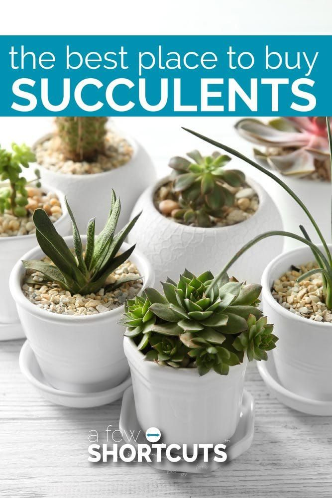 Do You Love Succulents But Aren T Sure Where To Them Check Out The Best Place Ensure A Beautiful Garden