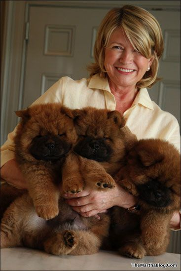 Martha Stewart Chow Puppies. I knew I always understood you, Martha. Anyone who loves a Chow knows what's worth having.