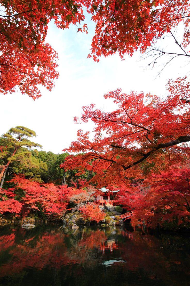真っ赤な紅葉につつまれた秋の京都醍醐寺