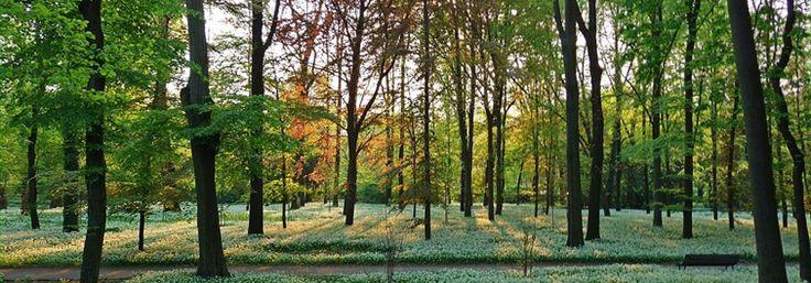 Parco di Villa Reale (Monza)