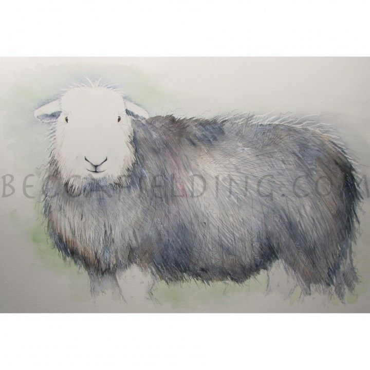 One of my Herdwick sheep watercolour paintings www.beccafielding.com
