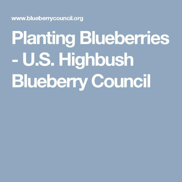 Planting Blueberries - U.S. Highbush Blueberry Council