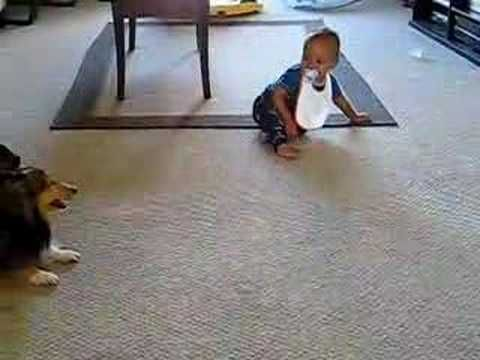 Watch This Baby & Dog Have A Giggle Fest Together (So Cute!)