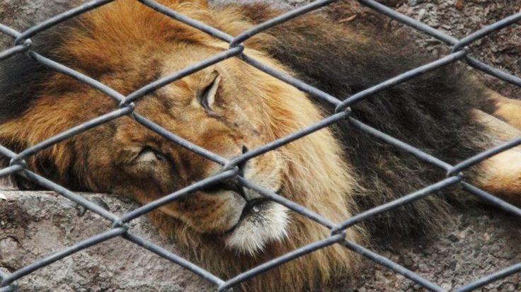 Proponen cerrar el Zoo de la Ciudad para transformarlo en un Jardín ecológico   Animales, Buenos Aires - Infobae