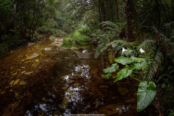 Experience the forests of #Knysna in 360Degrees: http://goo.gl/sxXNKP. We've created 360 degree panoramas so that your can see what its really like in these indigenous forests. #GardenRoute #SoouthAfrica