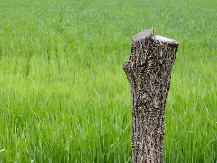 #Tree_Stump in #Grassy Environment - The proper care of #trees is crucial to the preservation of a natural setting, in addition to having an impact on what grows and what is unable to #flower. Remnants from previous flowering trees soon blend in with their surroundings.
