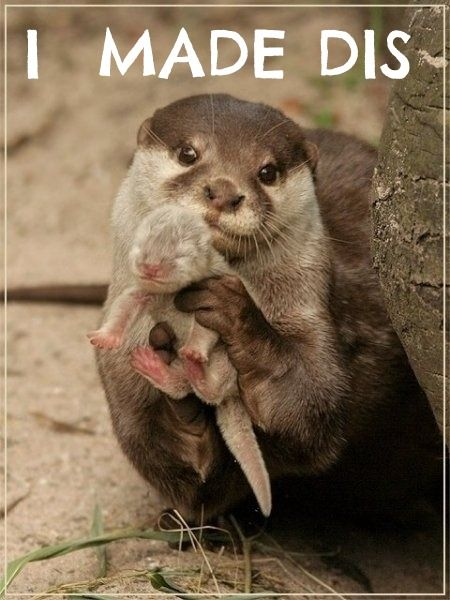 Cute!: Mothers, Sweets, Baby Otters, Adorable, Baby Animals, Cute Babies, Sea Otters, Mom, River Otter