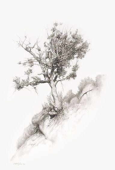 tree drawings drawing tegning pinterest tree drawings drawings and drawing trees
