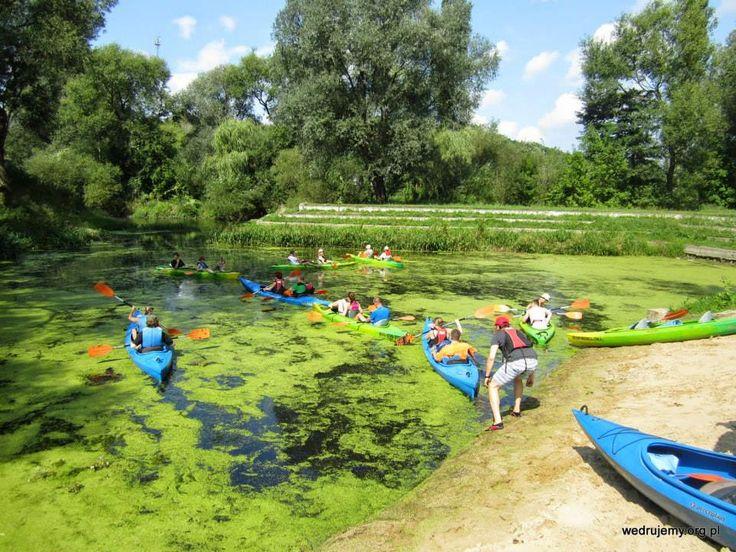 Spływ Drwęcą, sierpień 2014